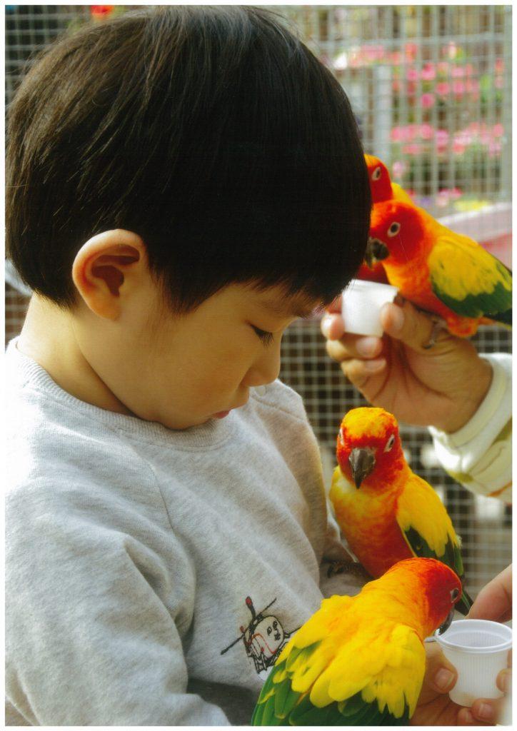 インコにふれあえる/富士花鳥園(静岡県/富士宮市)