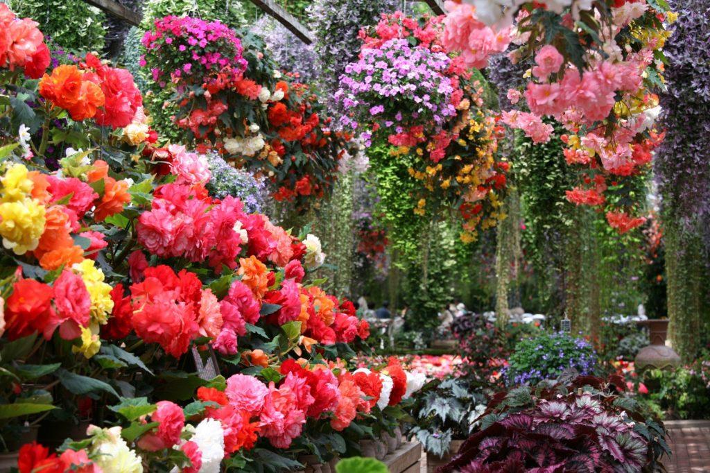 一年中花いっぱいのハウス/富士花鳥園(静岡県/富士宮市)
