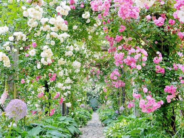 満開のバラに彩られるガーデン/アカオハーブ&ローズガーデン(静岡県熱海市)