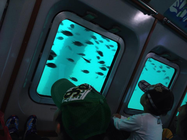 船内展望室の海中が見えるガラス窓/熱海遊覧船 サンレモ(静岡県熱海市)