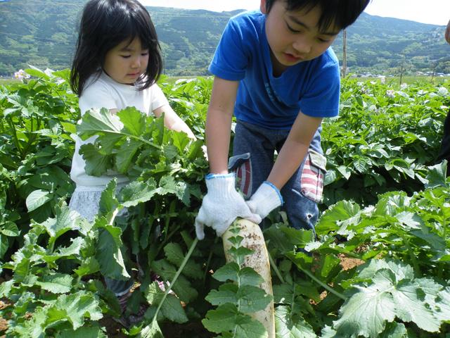 野菜の収穫体験/伊豆丹那の酪農王国 オラッチェ(静岡県田方郡函南町)