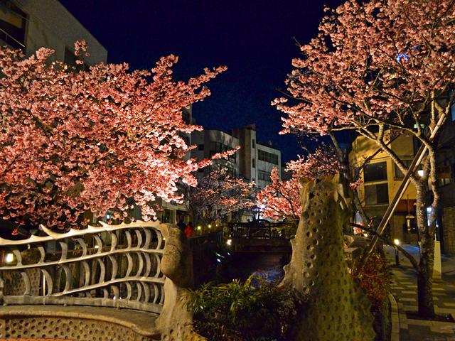 桜まつり期間中はライトアップも開催/あたみ桜 糸川桜まつり(静岡県熱海市)
