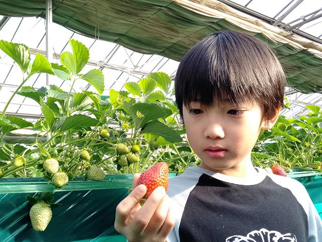 いちご狩りを楽しむ子ども/エーアト・ベーレ(千葉県/千葉市)