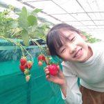 イチゴ狩りのおすすめ時期は?豆知識は?千葉市「エーアト・ベーレ」で達人を直撃