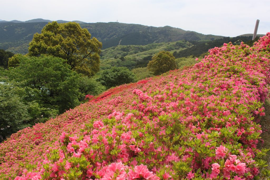 山の傾斜を利用した園内の「ツツジ園」/姫の沢公園(静岡県熱海市)