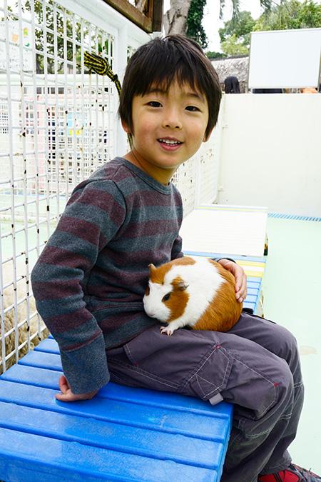 モルモットをヒザにのせる子ども/江戸川区自然動物園(江戸川区)