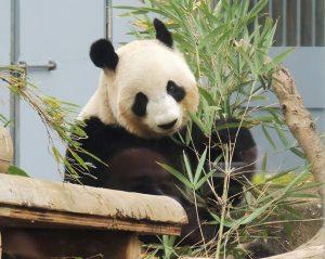 【東京】子連れにおすすめの動物園はココ! ふれあい・無料など特徴別に選ぶ