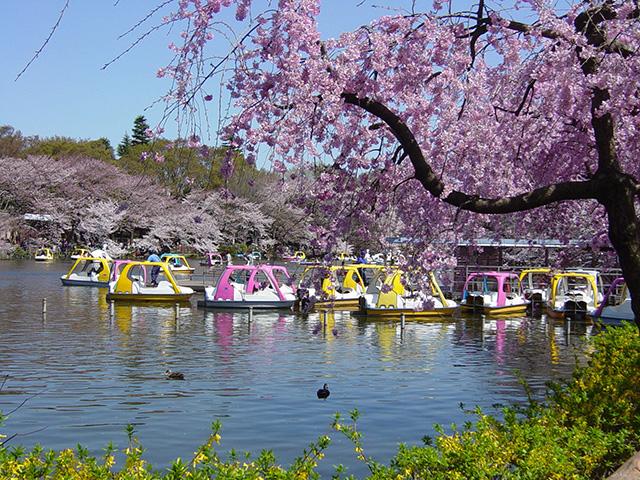 春の桜/井の頭恩賜公園(東京都/武蔵野市)