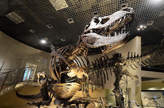 ティラノサウルスの全身骨格/国立科学博物館(東京都/台東区)