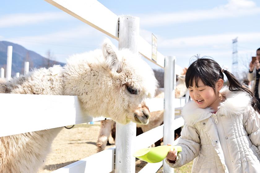 アルパカにエサをあげる様子/滋賀農業公園 ブルーメの丘(滋賀県/日野町)