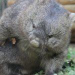大阪府のおすすめ無料スポット24選!動物園には珍獣ウォンバットやアルパカも