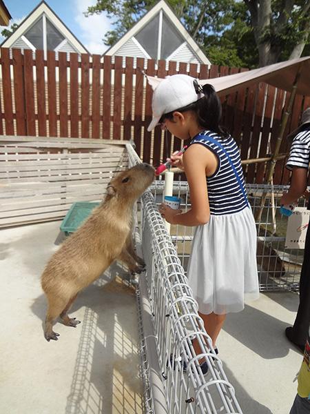 カピバラにエサをあげる子ども/豊橋総合動植物公園 のんほいパーク(愛知県/豊橋市)