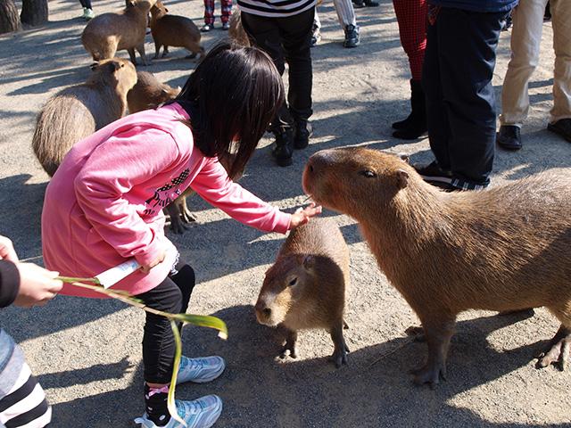 カピバラをさわる子ども/海の中道海浜公園(福岡県/福岡市)
