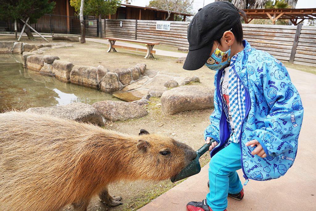 カピバラに餌やり/赤穂海浜公園(兵庫県/赤穂市)