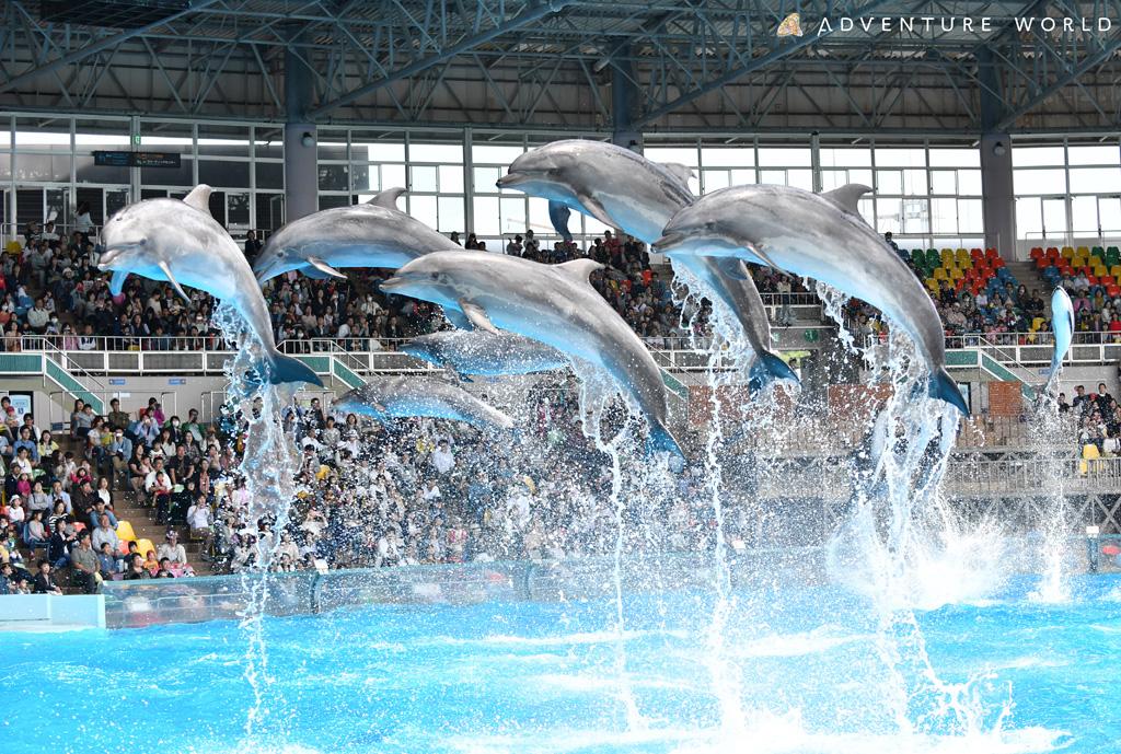 イルカとトレーナーが共演するマリンライブ/アドベンチャーワールド(和歌山県/西牟婁郡白浜町)
