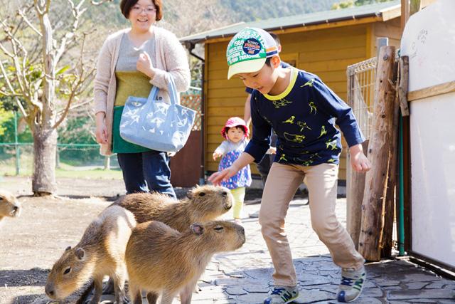 カピバラにエサやりする様子/伊豆アニマルキングダム(静岡県/東伊豆町)