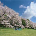 広い公園でお花見さんぽ。東京の桜の名所、おすすめ大型公園8選