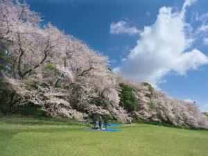 広い公園でお花見さんぽ。東京の桜の名所、おすすめ大型公園8選【コロナ対策】