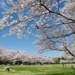 子ども連れでお花見散歩!関東のおすすめ桜スポット&大型公園20選
