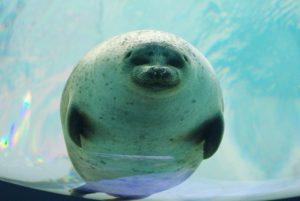 カワイイ動画に癒される!全国の動物園・水族館おすすめ動画109選【休校・コロナ対策】