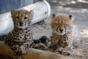 動物の赤ちゃん動画に日本一癒される?! 姫路セントラルパークのサイトをオープン