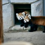 全国動物園のコロナによる休園・営業再開まとめ(2020/5/29更新)
