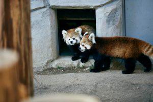 全国動物園のコロナによる休園・営業再開まとめ(2020/5/26更新)