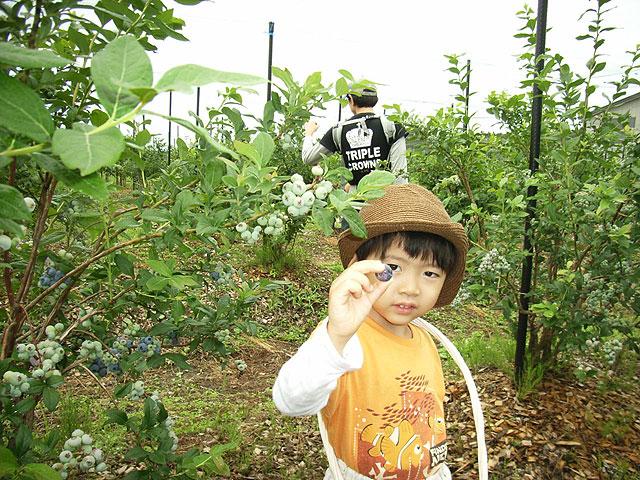 神宮寺観光果樹園(神岡縄文農園)(秋田県/大仙市)