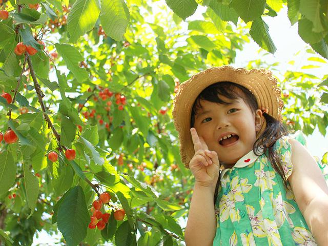 小野洋らん果樹園(山梨県/南アルプス市)