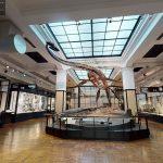 国立科学博物館が無料提供!おうちで「バーチャルかはく」体験や恐竜ぬりえなど