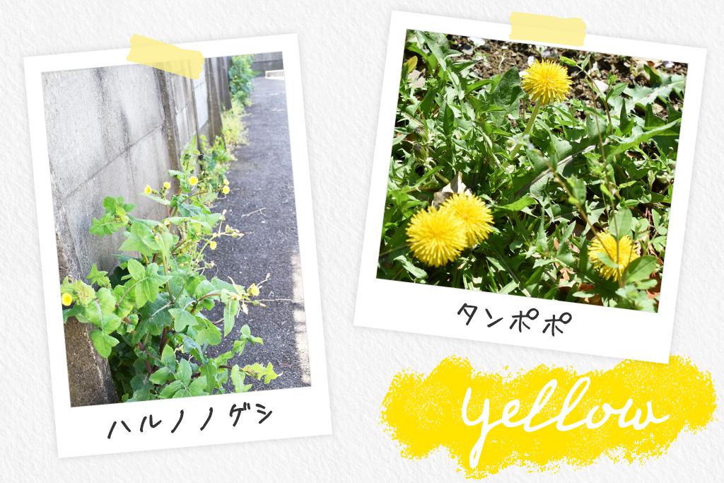 黄色い花/一般社団法人 遊心®