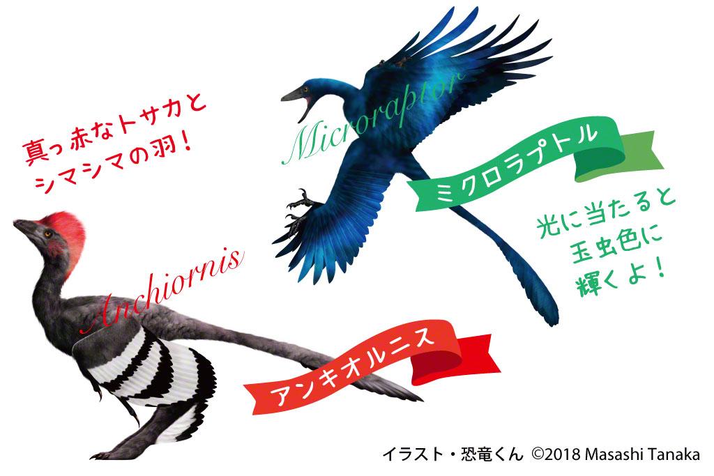 赤いトサカとシマシマの羽のアンキオルニスと光に当たると玉虫色に輝くミクロラプトル
