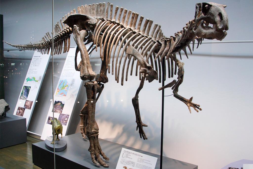フクイサウルス 福井県立恐竜博物館 全身復元骨格
