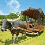 沖縄体験が楽しいテーマパーク10選!自然や文化を遊びながら学ぼう