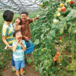 夏野菜の収穫体験2020!ひまわり迷路などのイベントも楽しい農園4選