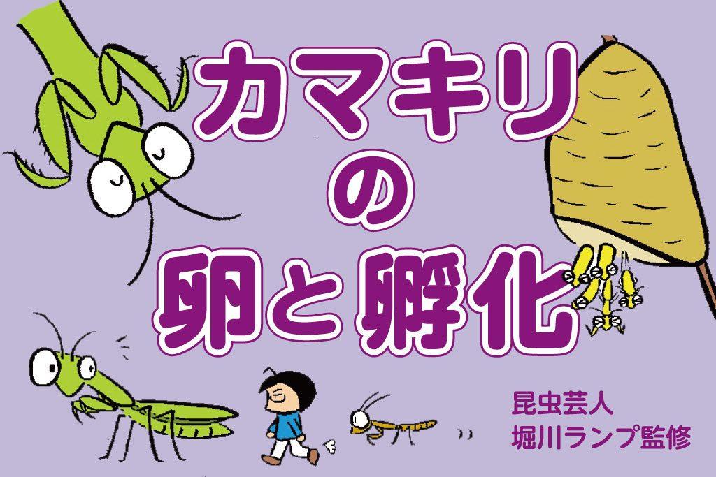 カマキリの卵と孵化/昆虫芸人 堀川ランプ監修