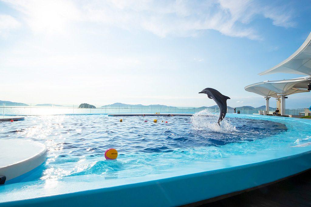 「海豚プール」/四国水族館(香川県/宇多津町)