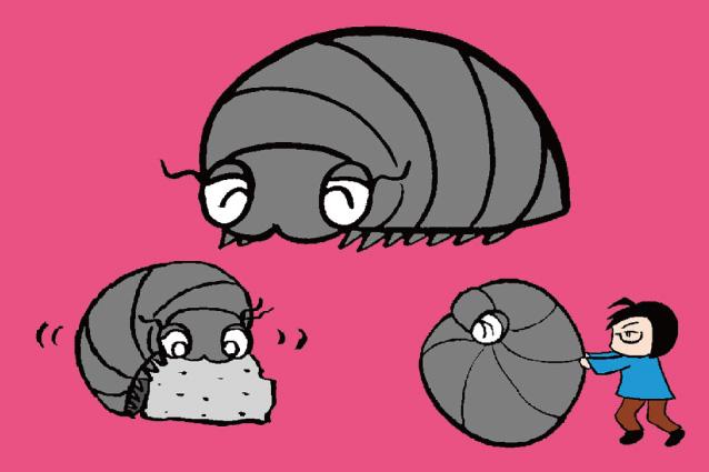 ダンゴムシ徹底解説!足の数、飼育、餌、ダンゴムシ迷路…コンクリートも食べる!?
