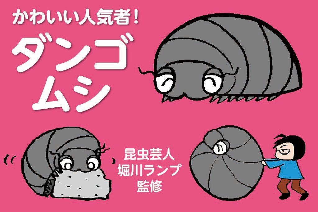 かわいい人気者!ダンゴムシ 昆虫芸人堀川ランプ監修