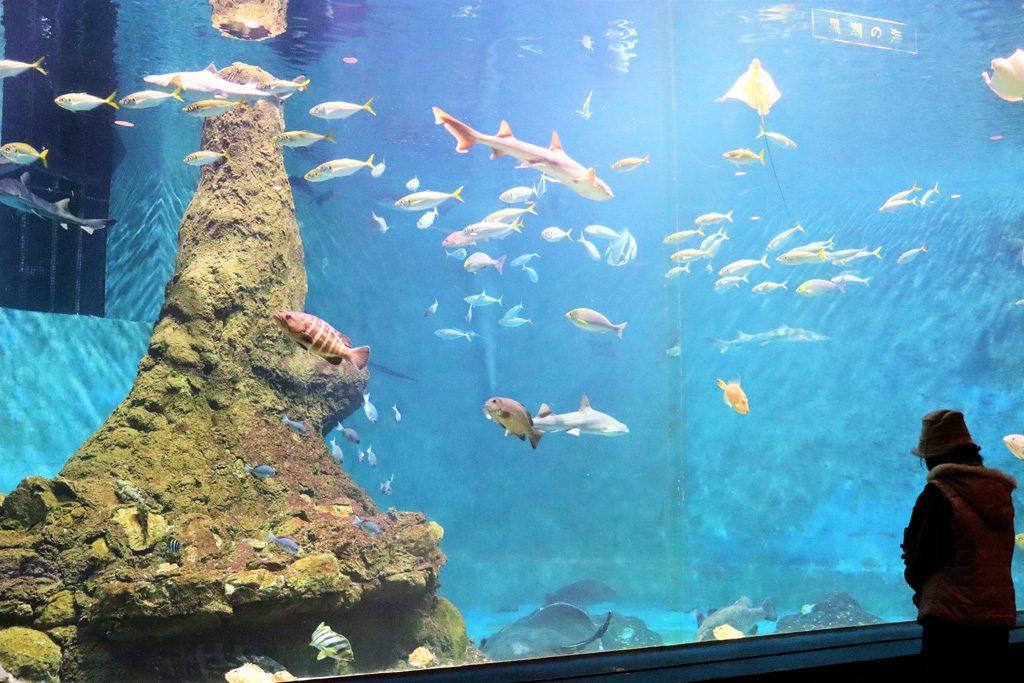 和歌山県立自然博物館は、水族館ゾーンやモササウルス、恐竜の化石など見どころ満載