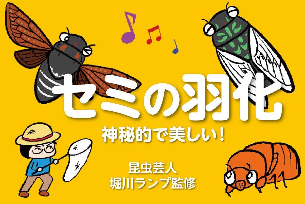 セミの羽化 神秘的で美しい!/昆虫芸人 堀川ランプ監修