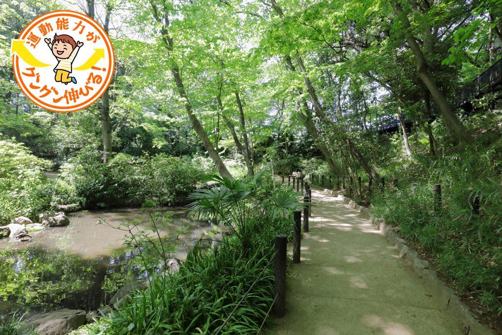 おとめ山公園(新宿区)で森の中を駆け回り自然観察を楽しもう