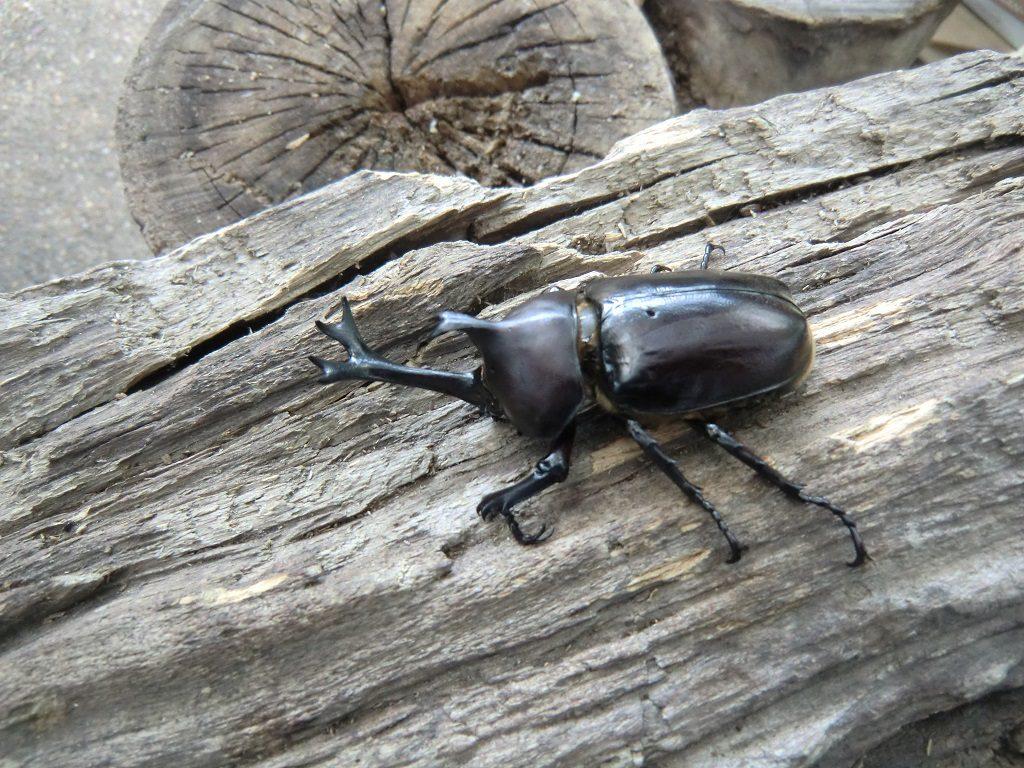 関西の昆虫館6選。カブトムシやクワガタ、蝶とのふれあいや、標本なども見ごたえ十分