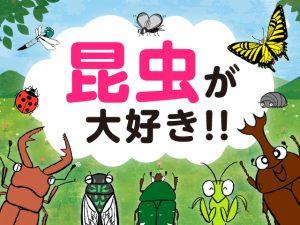 昆虫が大好き!!