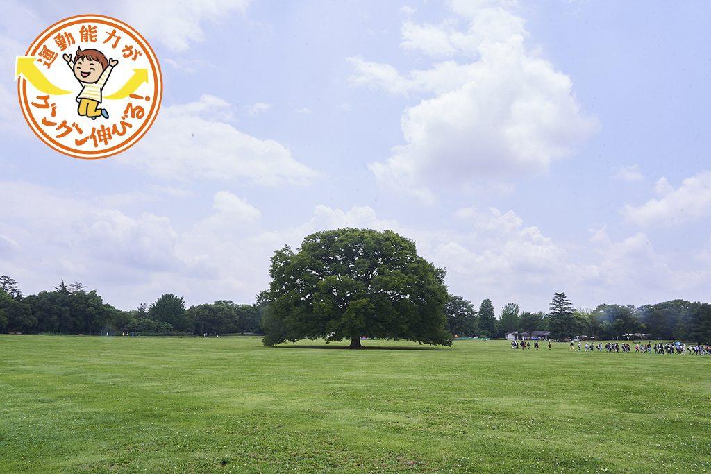 国営昭和記念公園(立川市・昭島市)には東京ドーム39個分の広さに遊具や施設がたくさん!