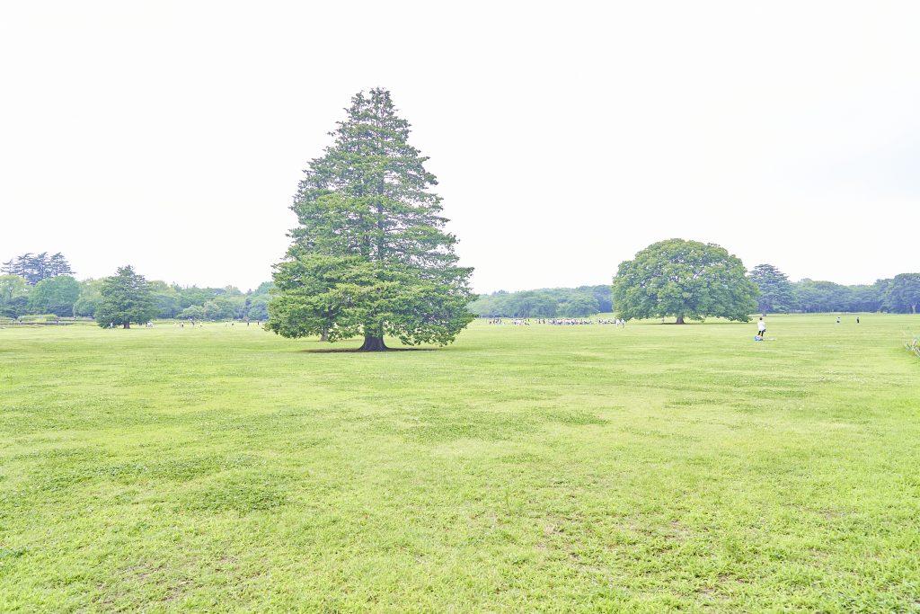 「みんなの原っぱ」/国営昭和記念公園(東京都/立川市)