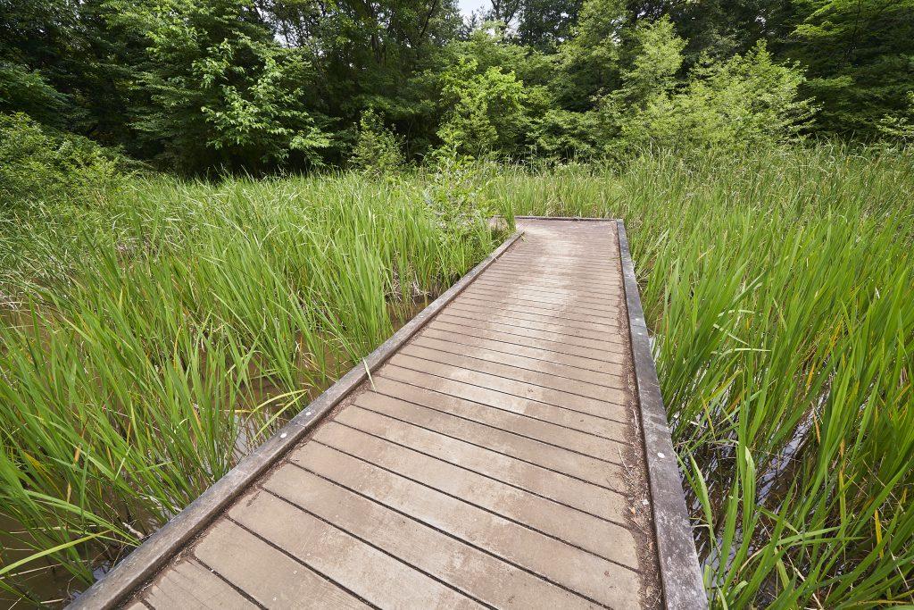 「トンボの湿地」/国営昭和記念公園(東京都/立川市)