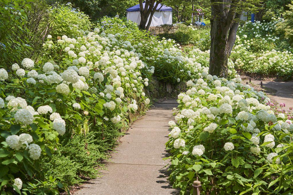 「花木園」/国営昭和記念公園(東京都/立川市)