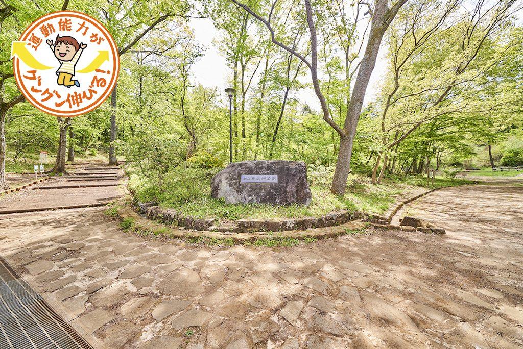 東大和公園(東大和市)は丘陵地を生かした雑木林の自然遊びが魅力