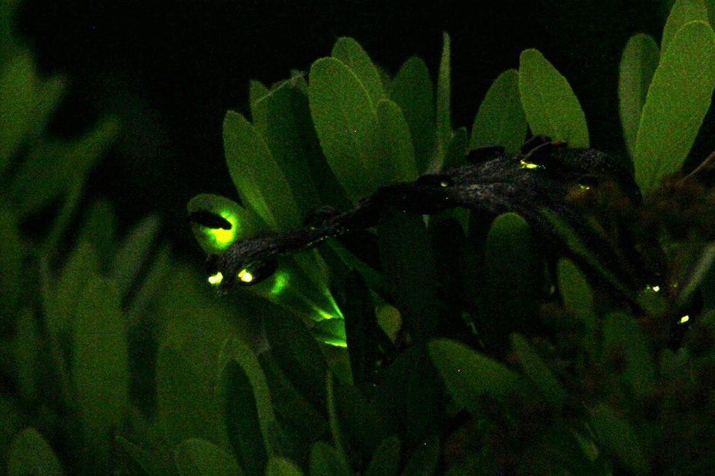 ヘイケボタルの生態や時期は?東武動物公園の「ほたリウム」なら1年中観賞できる!